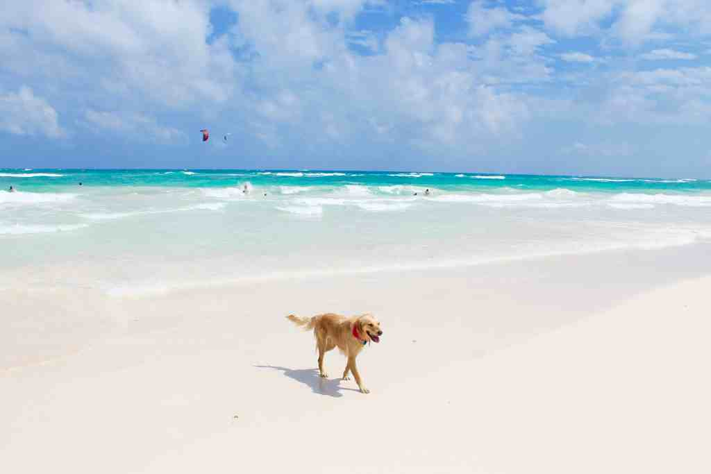 Coco Tulum Mexico Beach Travel Guide