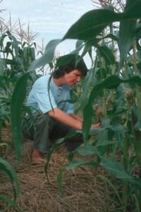 Machelle Small Wright in cornfield.