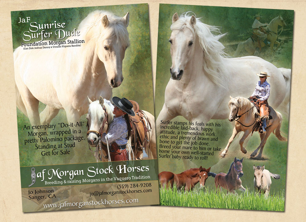 JaF Morgan Stock Horses stallion card