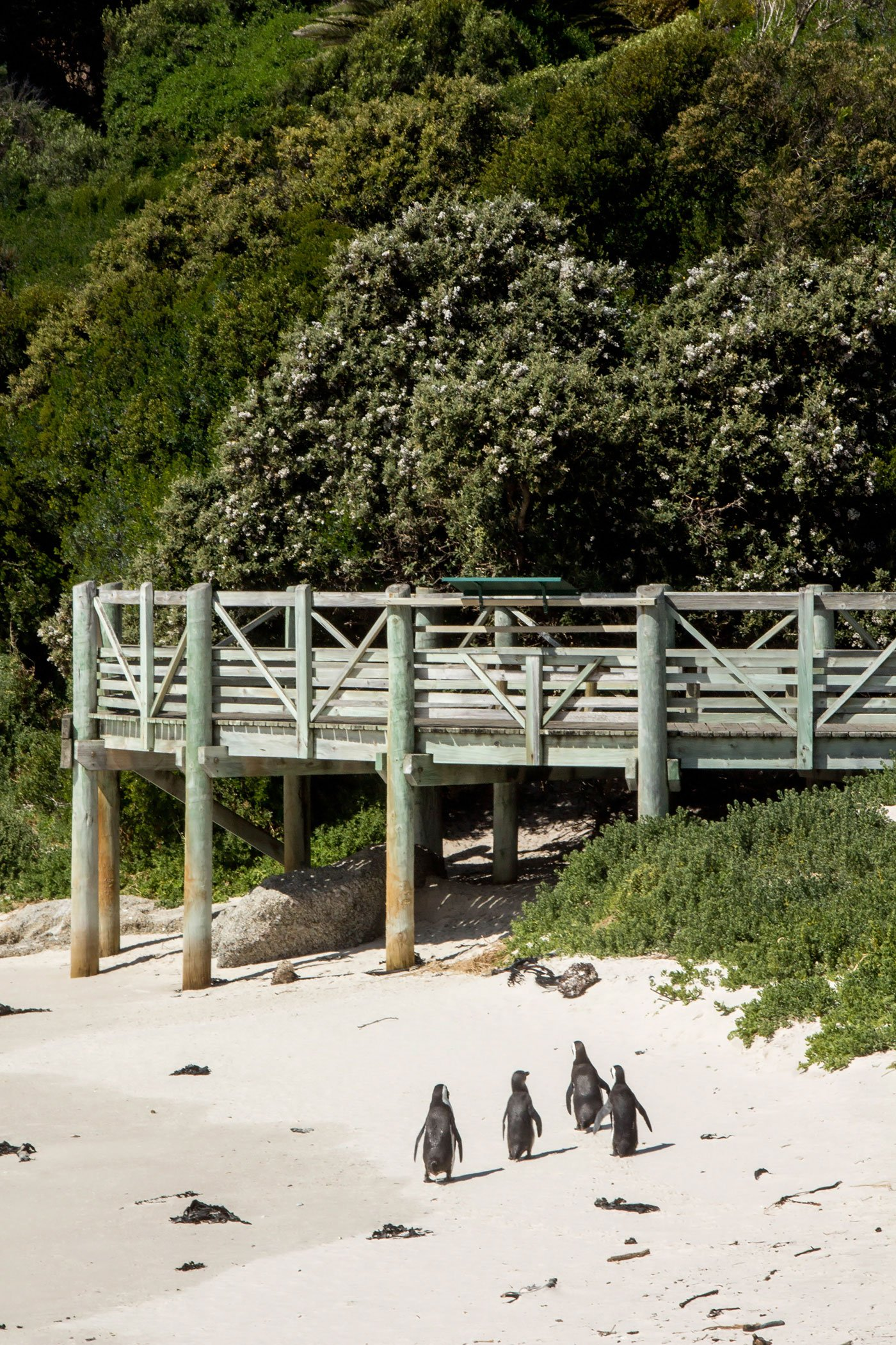 Wine and Wildlife: 3 Day Trips From Cape Town - Visiting the penguins at Boulders Beach