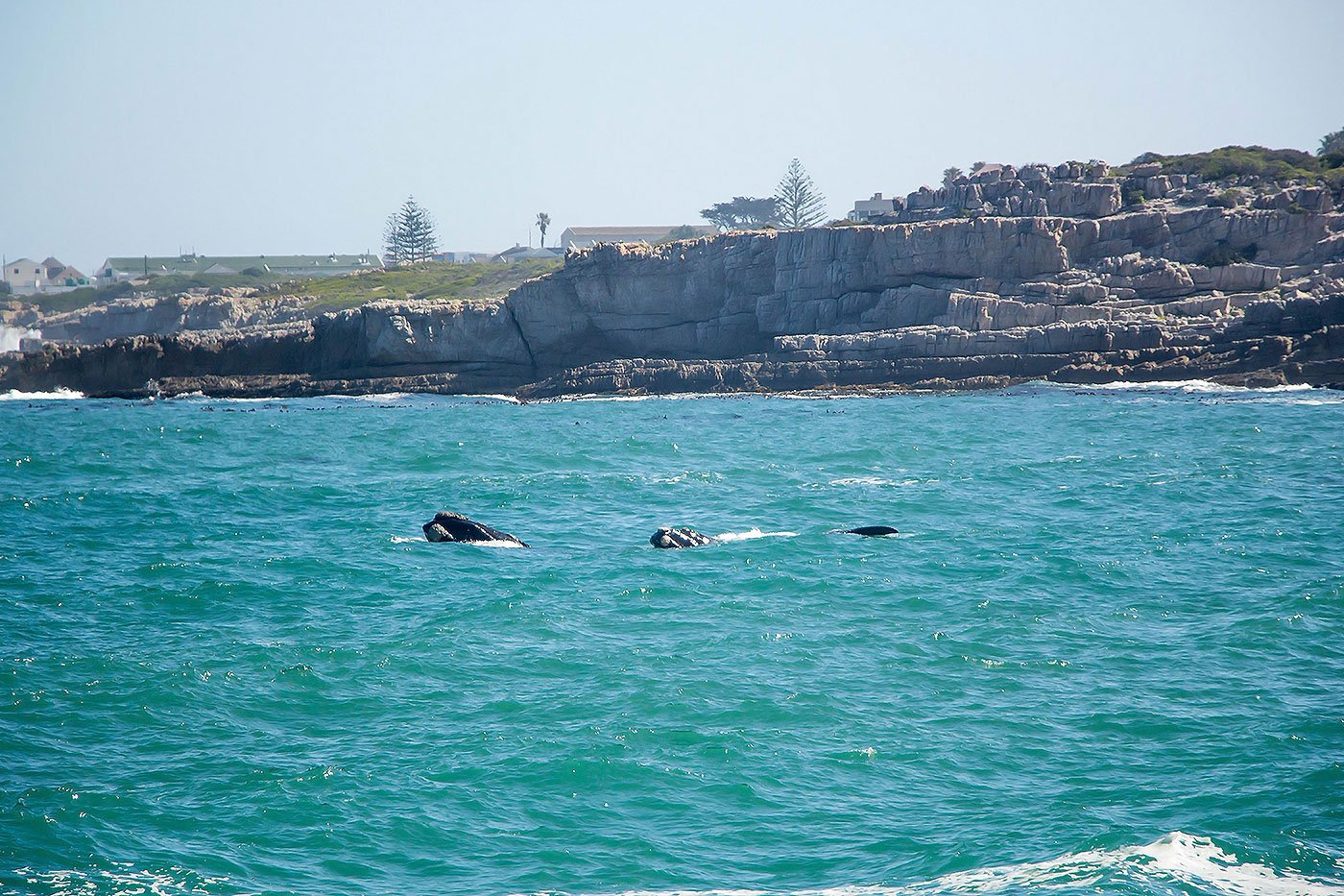 Wine and Wildlife: 3 Day Trips From Cape Town - Wale Watching in Hermanus