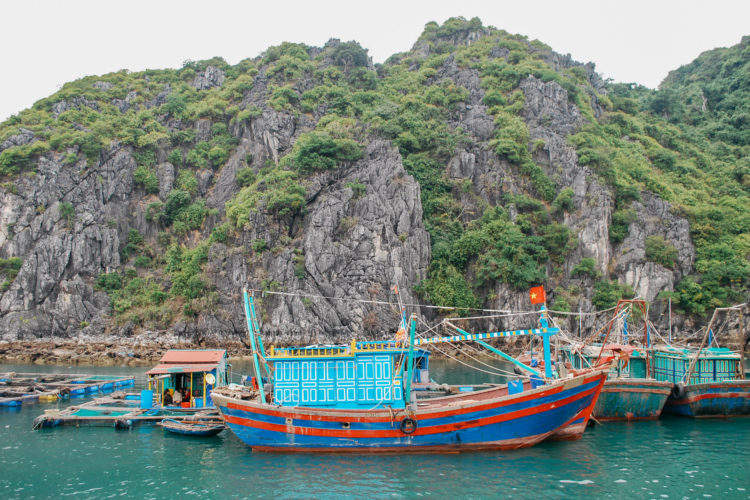 halong-bay-boats