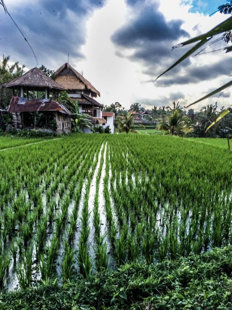 bali7 1 - 15 Must-Visit Destinations In Bali