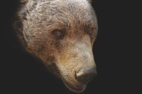 http://www.theretirementmanifesto.com/6-steps-to-avoid-the-looming-bear-market/