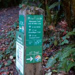 marquam trail to council crest.