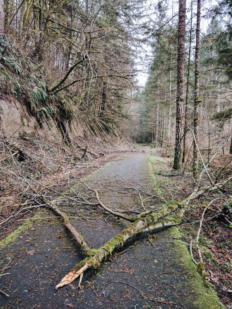 Winter on the Banks-Vernonia Trail | theringers.co