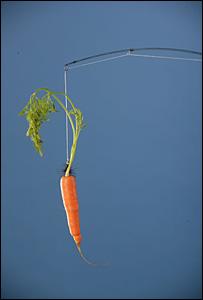 carrot rod