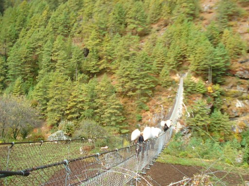 Yaks crossing a bridge on the trek to Mount Everest base camp