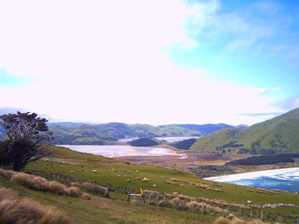 Inlet views on the Otago Peninsula, Dunedin, New Zealand