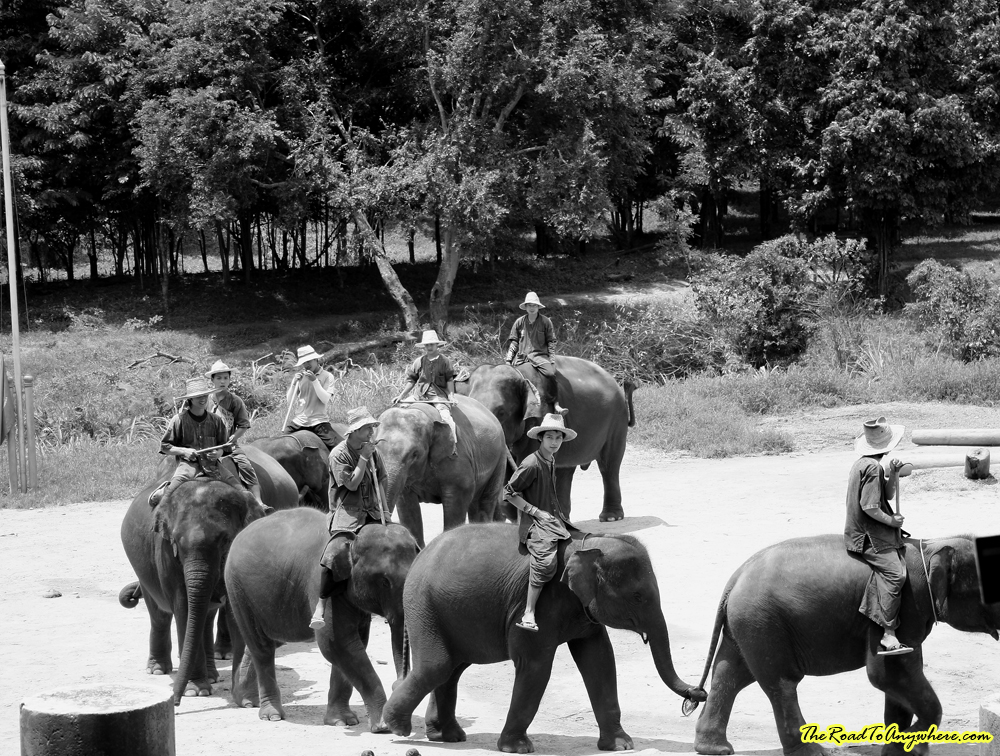 elephants marching at an elephant camp near Chiang Mai, Thailand