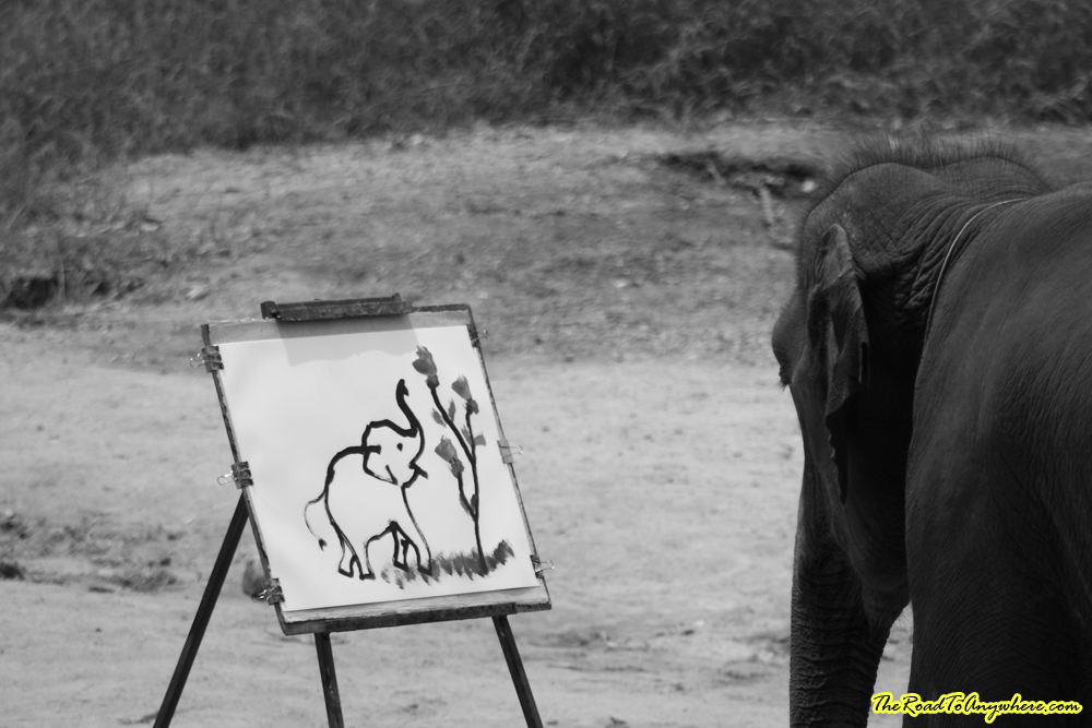 Elephant painting at an elephant camp near Chiang Mai, Thailand