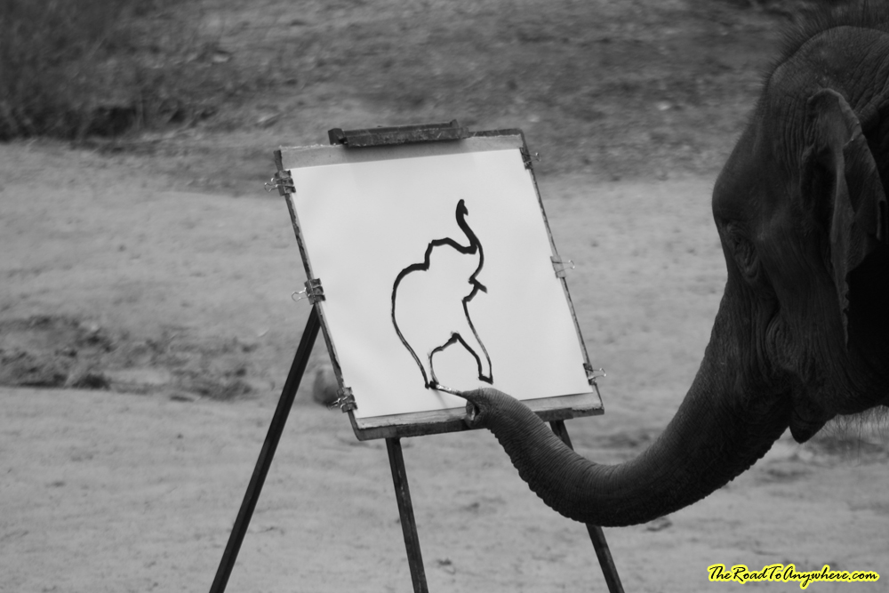 An elephant painting at an elephant camp near Chiang Mai, Thailand