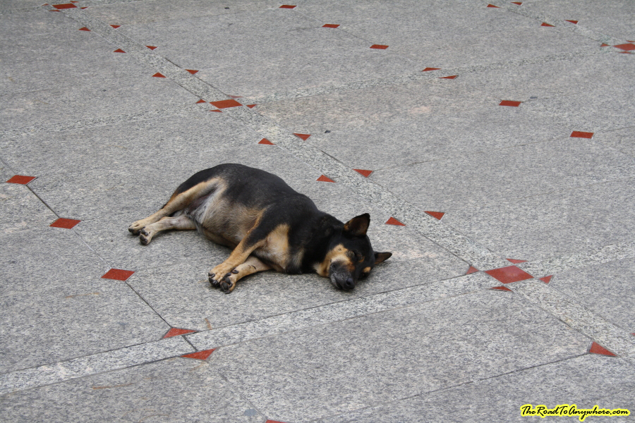 A dog at Wat Indraviharn in Bangkok, Thailand