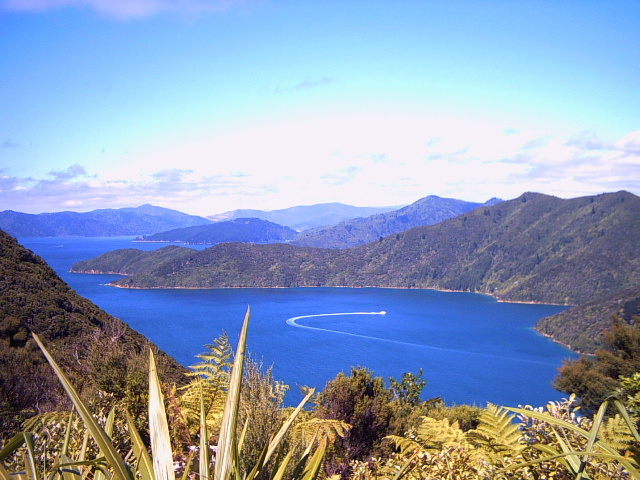 Cove on the Queen Charlotte Track, New Zealand