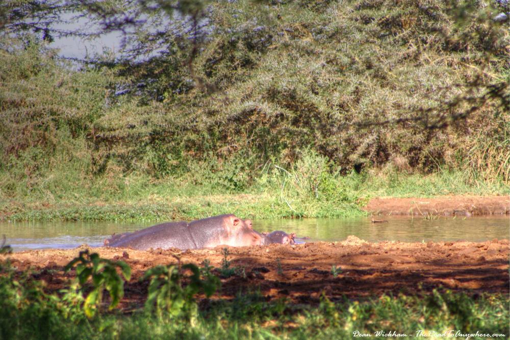 Hippos in Lake Manyara National Park, Tanzania