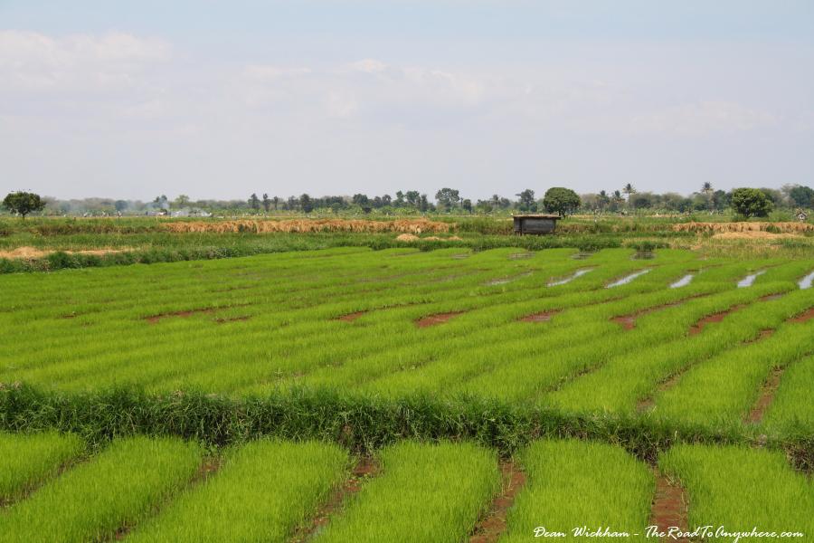 Rice fields in Mto wa Mbu, Tanzania
