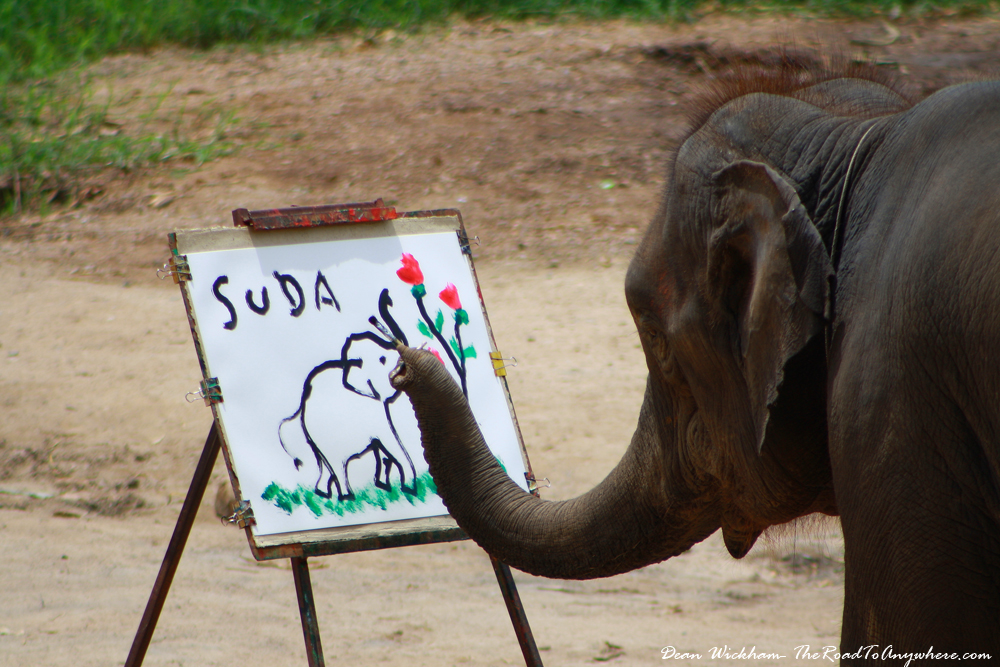 An elephant painting a picture near Chiang Mai, Thailand