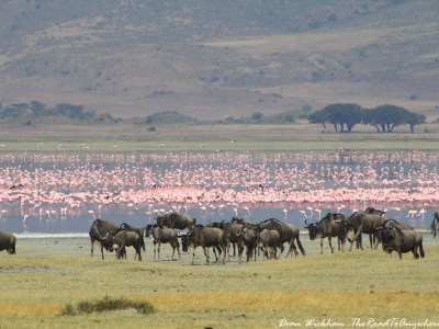 Wildebeest and Flamingos in Ngorongoro Crater, Tanzania