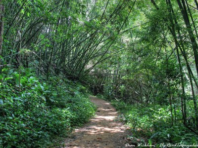 Bamboo Forest Trail in Northern Thailand