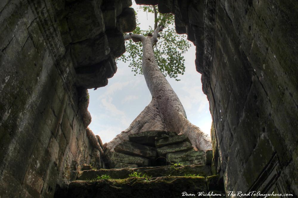 Tall tree growing on ruins at Preah Khan in Angkor, Cambodia