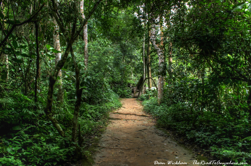 Jungle path at Kuang Si, Laos