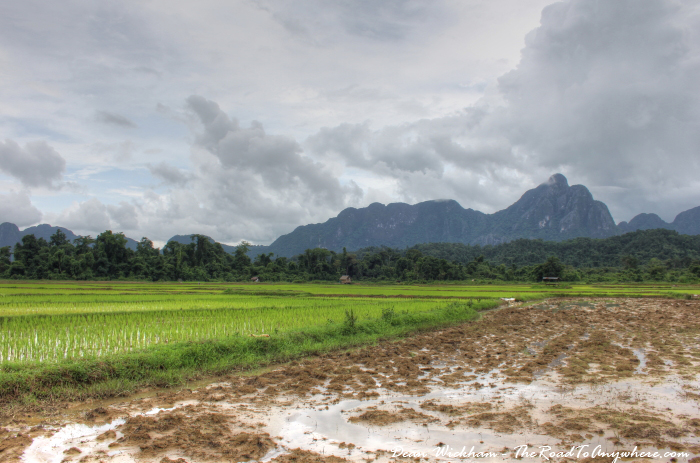 Rice field ready to be planted in Vang Vieng, Laos