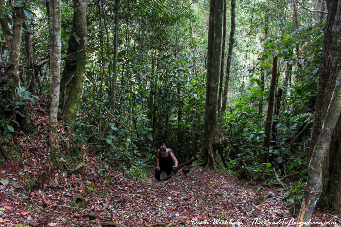 Hiking in the Cameron Highlands, Malaysia