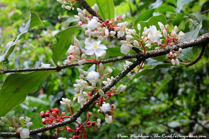 Rainforest Flowers in the Cameron Highlands, Malaysia