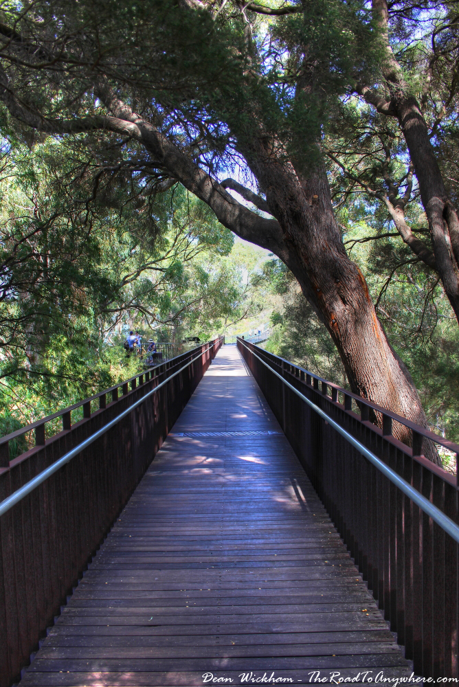 Boardwalk amongst the trees in Kings Park in Perth, Western Australia