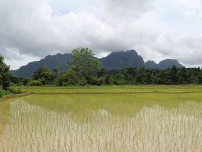 A freshly planted rice field in Vang Vieng, Laos