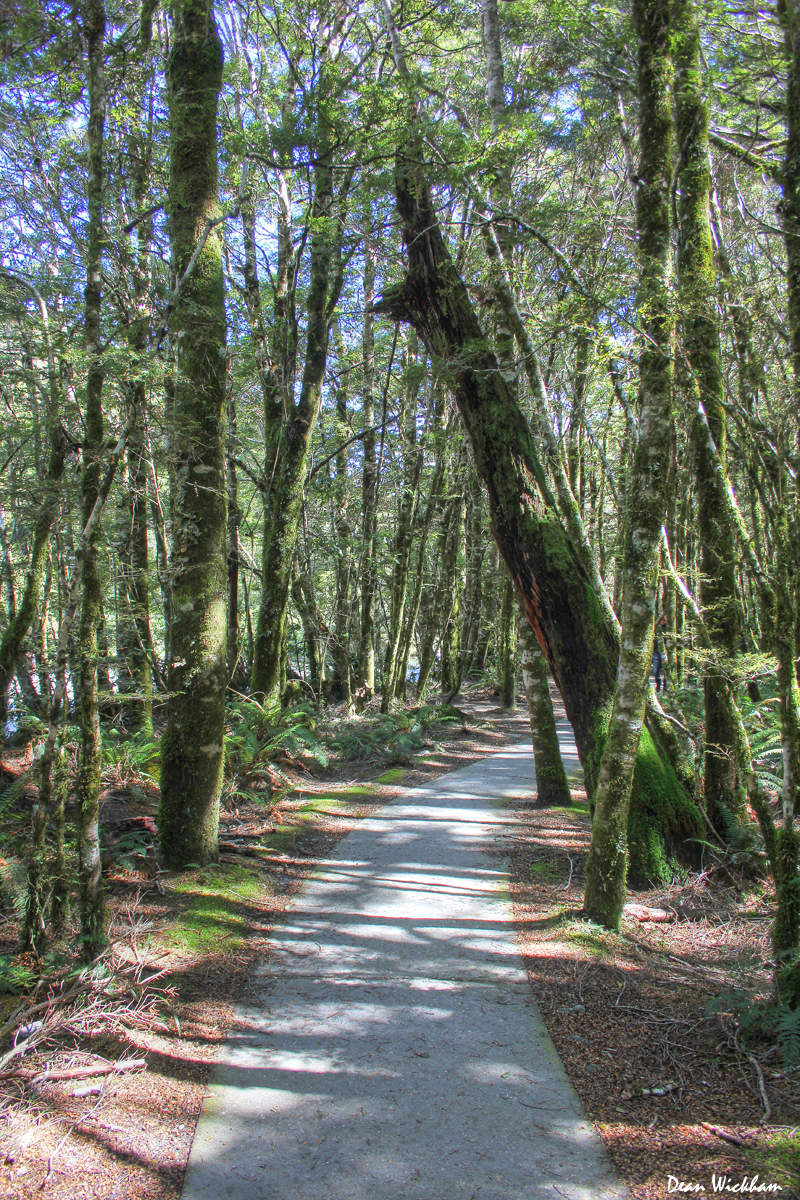 Path through the forest, Haast Pass, New Zealand