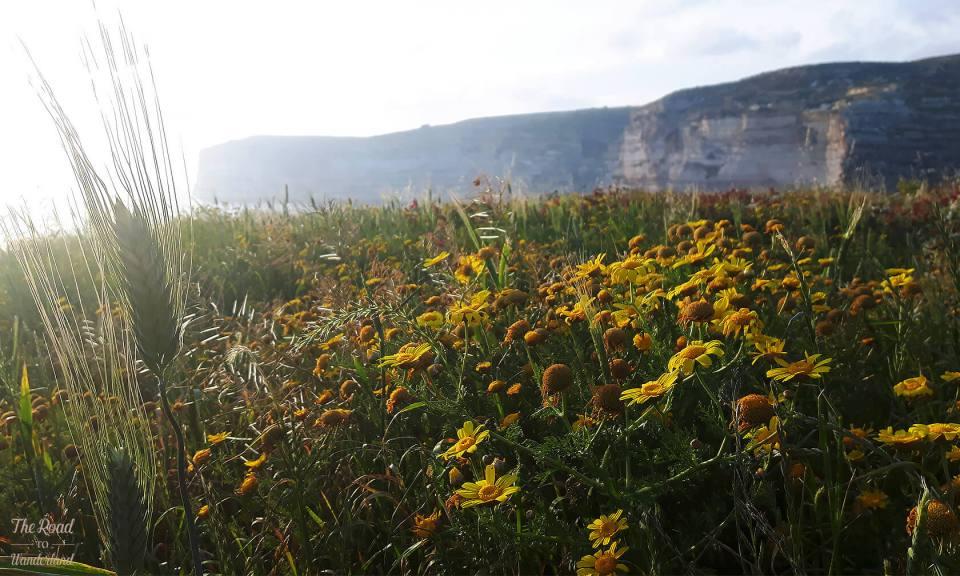 Xlendi cliffs in the spring
