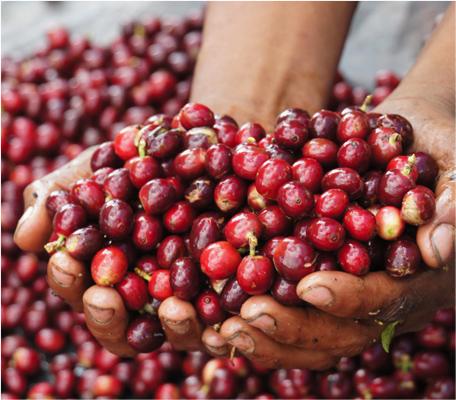 5_cherries