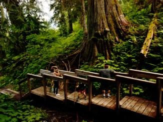 Ancient Forest boardwalk build in progress.