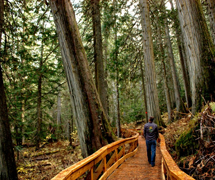 New effort to preserve Robson Valley's Ancient Forest