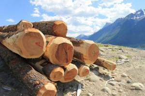 Boom logs for collecting debris on Kinbasket Reservoir