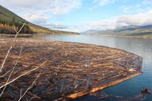 Debris penned by boom logs in Kinbasket Reservoir