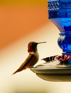 Humming Bird Bob Hoskins