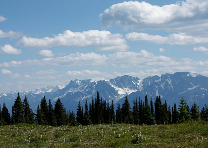 Letter: View from an alpine meadow