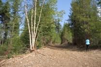 Mt Terry Fox Trail Logging road improvements (11)