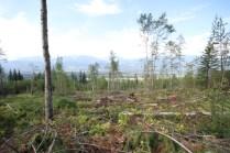 Mt Terry Fox Trail Logging (4)