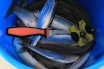 Valemount Marina Fishing Derby 2014 fish (14)