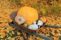 Fall harvest osadchuk pumpkin mushroom valemount (1)