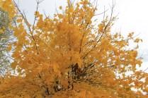 Fall harvest osadchuk pumpkin mushroom valemount (10)