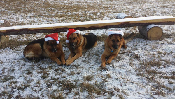 New lease on life for shoot-out dogs
