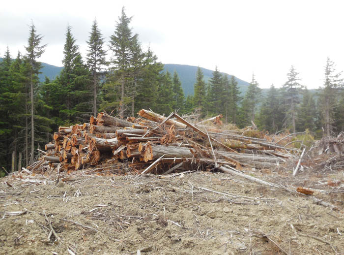 Increasing diversity in the forest sector