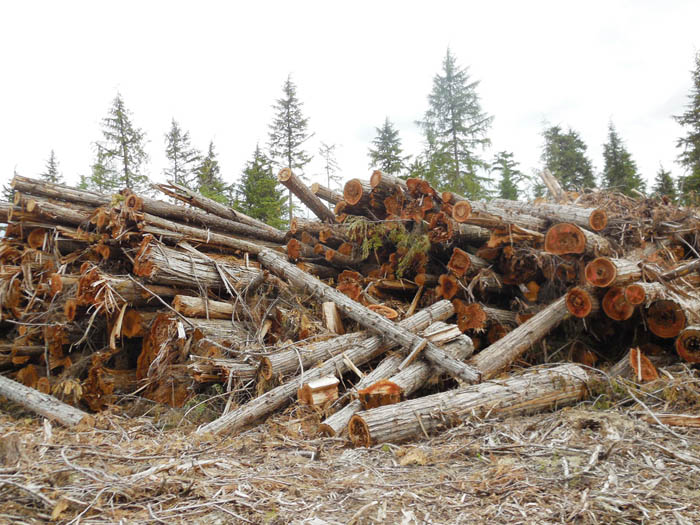 Community Forest Meeting postponed again
