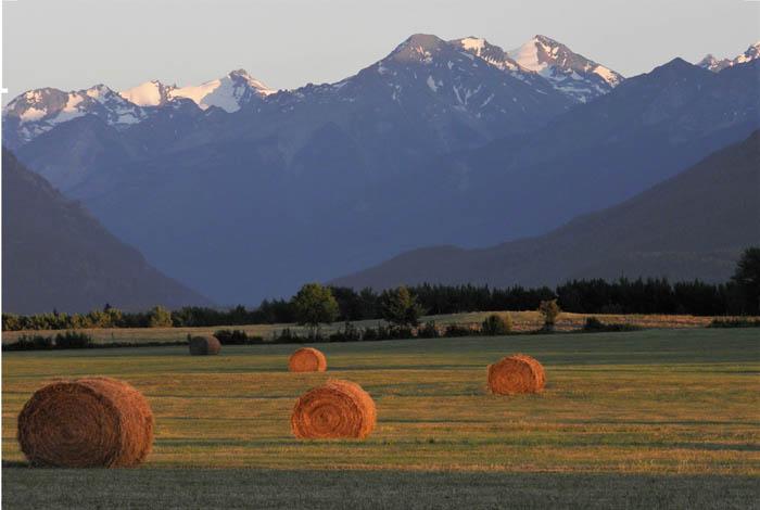 The fine art of making hay in the rain: swath grazing