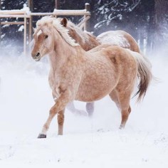 """""""Horses just live right now. They'll let you make a mistake over and over and over again. When you get it right, they'll say, 'Yeah, I'll follow that.'"""" -Paul Nichols, Communities for Veterans / PhOTO COURTESY ThE FORGE PROGRAMS.CA"""