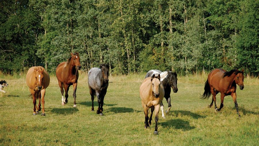 Falling_Star_Ranch_horses_running